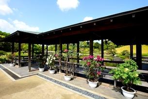 堺,新緑の大仙公園,日本庭園休憩舎の写真素材 [FYI04083963]