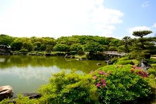 堺,新緑の大仙公園,日本庭園杜若池の写真素材 [FYI04083980]