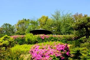堺,新緑の大仙公園,日本庭園の写真素材 [FYI04083981]