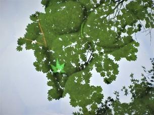 秋の緑の写真素材 [FYI04084282]