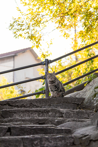 目が合うネコの写真素材 [FYI04084316]