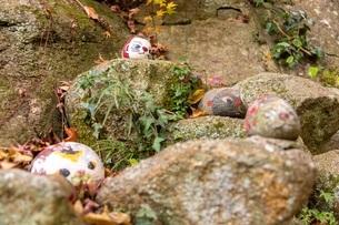 岩にたたずむ猫の写真素材 [FYI04084317]