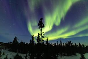 アラスカ フェアバンクスの薄暮に現れたオーロラの写真素材 [FYI04084339]
