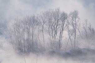 霧氷の写真素材 [FYI04084481]