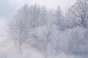 霧氷の写真素材 [FYI04084482]