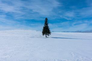 美瑛のクリスマスツリーの写真素材 [FYI04084556]