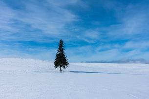 美瑛のクリスマスツリーの写真素材 [FYI04084557]