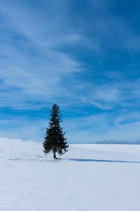 美瑛のクリスマスツリーの写真素材 [FYI04084558]
