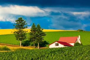 赤い屋根の家(北海道、美瑛町)の写真素材 [FYI04084635]