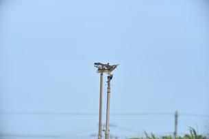 野鳥/鷹の写真素材 [FYI04084778]