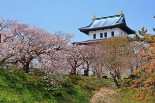 5月 桜の松前城 -北海道の春-の写真素材 [FYI04084861]