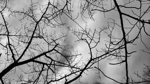 モノクロームの写真素材 [FYI04084900]
