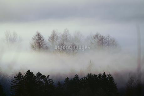 毛嵐の写真素材 [FYI04085138]