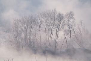 毛嵐の写真素材 [FYI04085139]