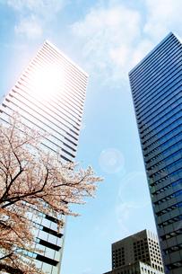 高層ビルと光と桜の写真素材 [FYI04085158]