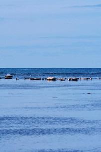 宗谷湾のゴマフアザラシの写真素材 [FYI04085189]