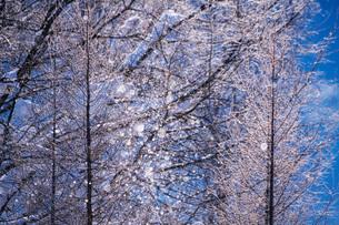 サンピラーと樹氷の写真素材 [FYI04085242]