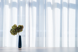 Bouquet in vase decorated near white curtain.  Modern lifestyle concept.の写真素材 [FYI04085270]