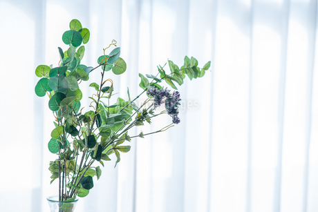 Bouquet in vase decorated near white curtain.  Modern lifestyle concept.の写真素材 [FYI04085279]