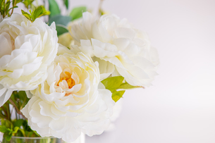 White artificial flower and green leaves with white background. Modern,Quiet lifestyle concept.の写真素材 [FYI04085280]