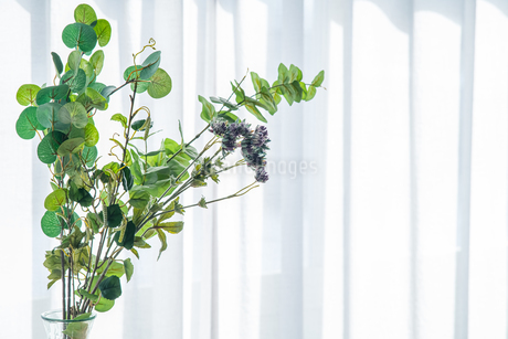 Bouquet in vase decorated near white curtain.  Modern lifestyle concept.の写真素材 [FYI04085281]