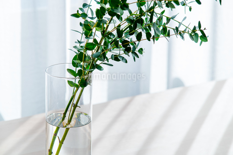 Bouquet in vase decorated near white curtain.  Modern lifestyle concept.の写真素材 [FYI04085285]