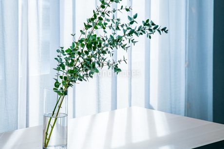 Bouquet in vase decorated near white curtain.  Modern lifestyle concept.の写真素材 [FYI04085286]