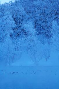 鳥沼公園の樹氷とけあらしの写真素材 [FYI04085436]