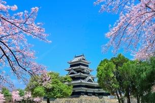 松本城とサクラの写真素材 [FYI04085783]