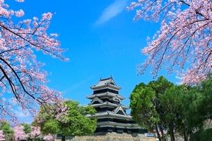 松本城とサクラの写真素材 [FYI04085784]