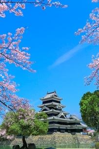 松本城とサクラの写真素材 [FYI04085785]