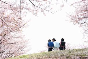 桜並木を三人で並んで歩く新一年生の写真素材 [FYI04085848]