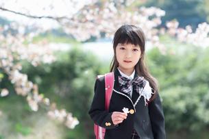桜の花びらを持つ正装した新一年生の女の子の写真素材 [FYI04085916]