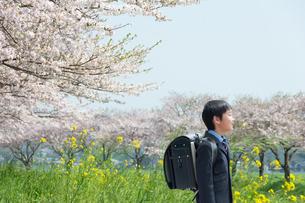 桜並木で歩く正装した新一年生の男の子の写真素材 [FYI04085917]