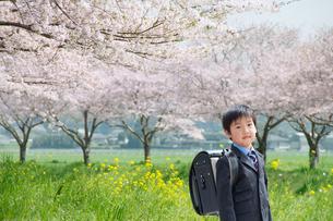 桜並木で歩く正装した新一年生の男の子の写真素材 [FYI04085918]