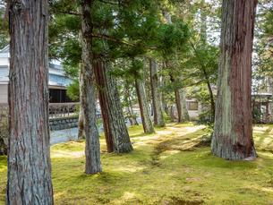 松島の瑞巌寺、参道の杉並木。津波による塩害で杉並木の本数は少なくなった。の写真素材 [FYI04086040]