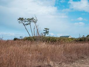 東日本大震災の被災地、宮城県仙台市荒浜地区の景色。の写真素材 [FYI04086072]