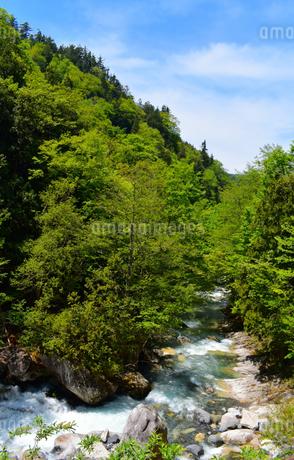 照葉峡 新緑の写真素材 [FYI04086185]