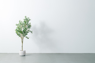 Beautiful green potted plant on white wall. Modern lifestyle concept.の写真素材 [FYI04086625]