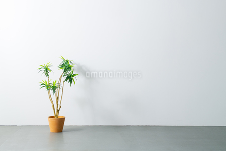 Beautiful green potted plant on white wall. Modern lifestyle concept.の写真素材 [FYI04086628]