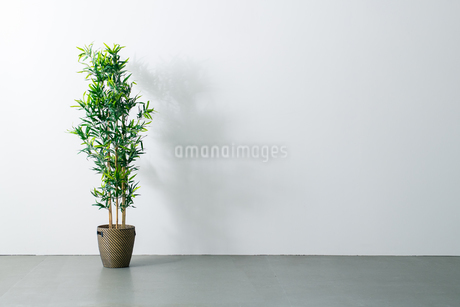 Beautiful green potted plant on white wall. Modern lifestyle concept.の写真素材 [FYI04086631]