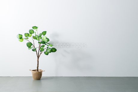Beautiful green potted plant on white wall. Modern lifestyle concept.の写真素材 [FYI04086632]