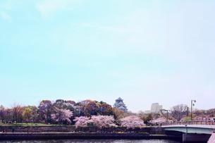 大阪城と桜と橋の写真素材 [FYI04086764]