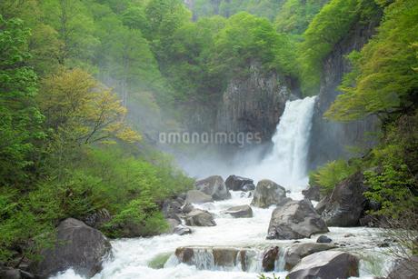 新緑の苗名滝の写真素材 [FYI04086934]