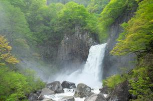 新緑の苗名滝の写真素材 [FYI04086935]