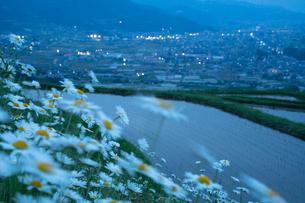 夕暮れの姨捨棚田と街並みのイルミネーションの写真素材 [FYI04086959]