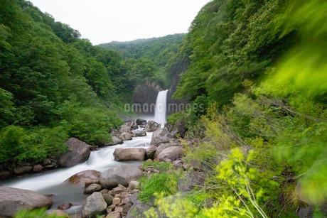 新緑の苗名滝の写真素材 [FYI04086989]