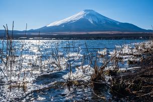 山梨県 山中湖から見る富士山の自然風景の写真素材 [FYI04087000]