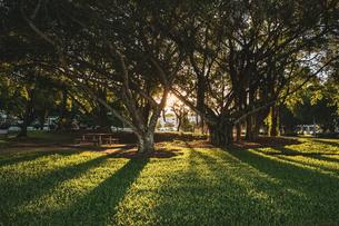 夕日の光が木から差し込む公園の様子の写真素材 [FYI04087001]