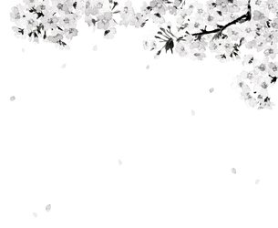 桜 さくら ソメイヨシノ 花吹雪 満開 水彩 水墨画風 モノトーンのイラスト素材 [FYI04087044]